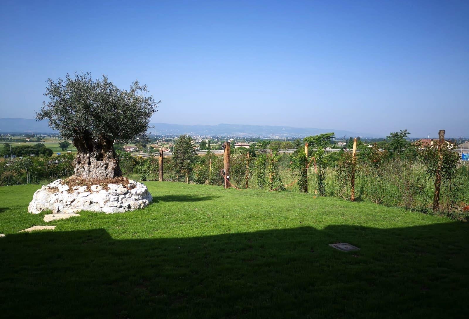 trattamento e manutenzione giardini