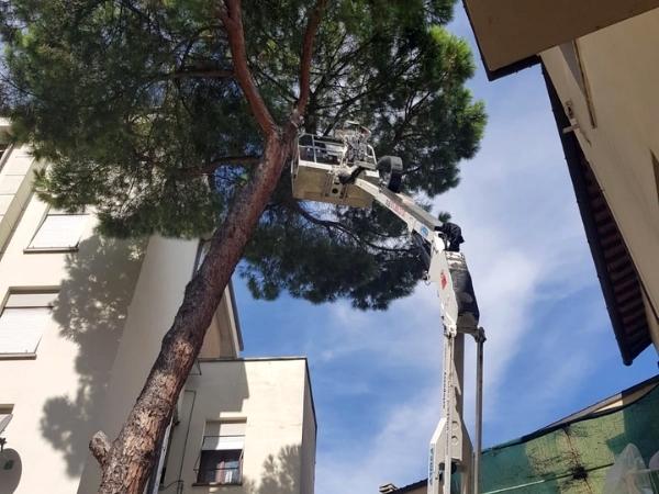 Potature alberi alto fusto con piattaforme aeree